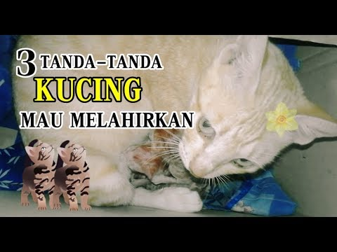 3 Tanda Tanda Kucing Mau Melahirkan Youtube