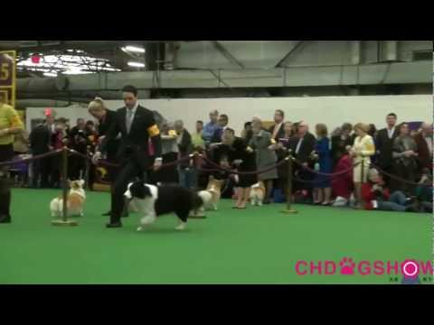 137th Westminster dog show Border Collie BOB.mp4