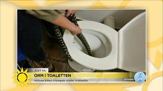 Skulle gå på toaletten – blev biten i rumpan av pytonorm - Nyhetsmorgon (TV4)