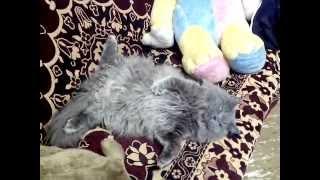 Котенок сильно устал...