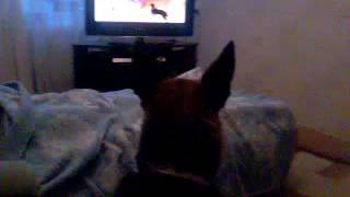 Собака смотрит телевизор .