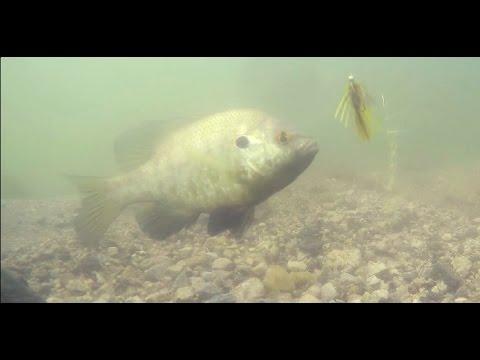 GoPro Underwater Bluegill fishing: Crazy Footage