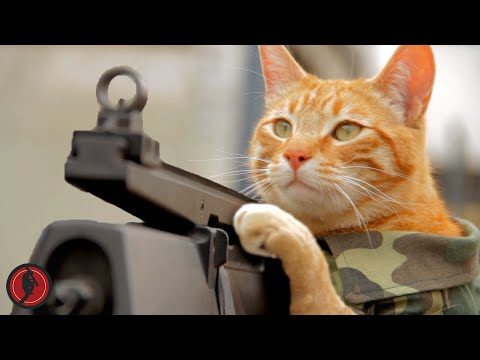 funny-medal-of-honor-cat-machine-gun
