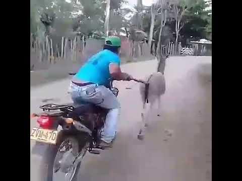 Funny video md kalim