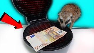 ЧТО ЕСЛИ ПОДЖАРИТЬ 50 EURO в ВАФЕЛЬНИЦЕ - СУРИКАТ ТИМКА БОИТСЯ ЩЕКОТКИ😝