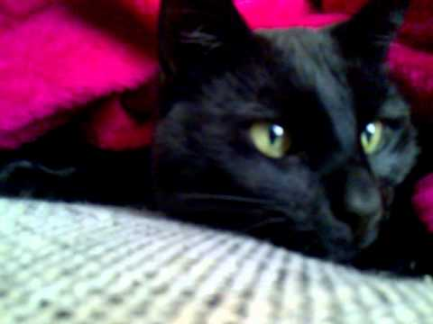 Youtube große schwarze Pussy