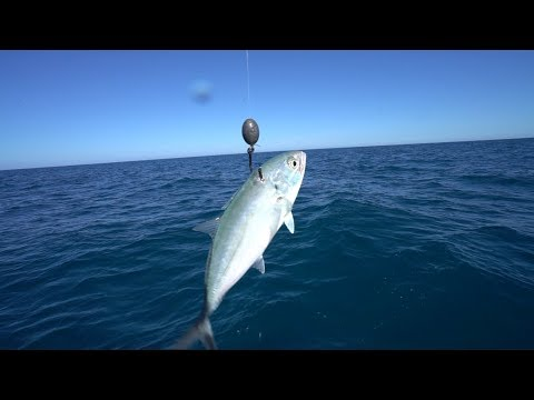 Deep Sea Fishing For Giant Mystery Fish