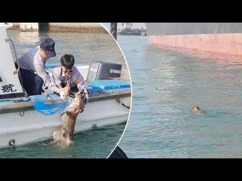 Swimming Dog Rescued After One-Hour Chase