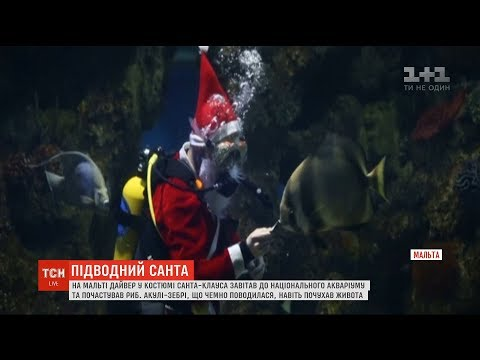 ТСН: Санта-Клаус привітав риб, які мешкають у національному акваріумі на Мальті
