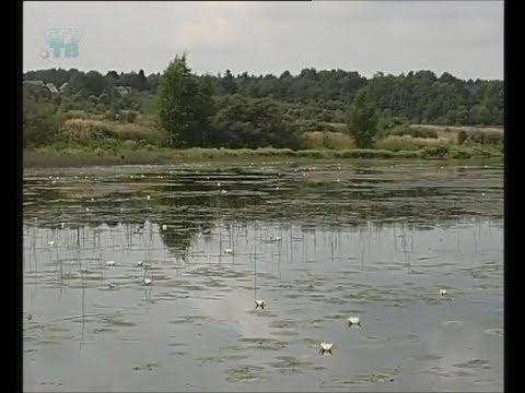 Пресный водоем. Пресные водоемы и особенности жизни в них