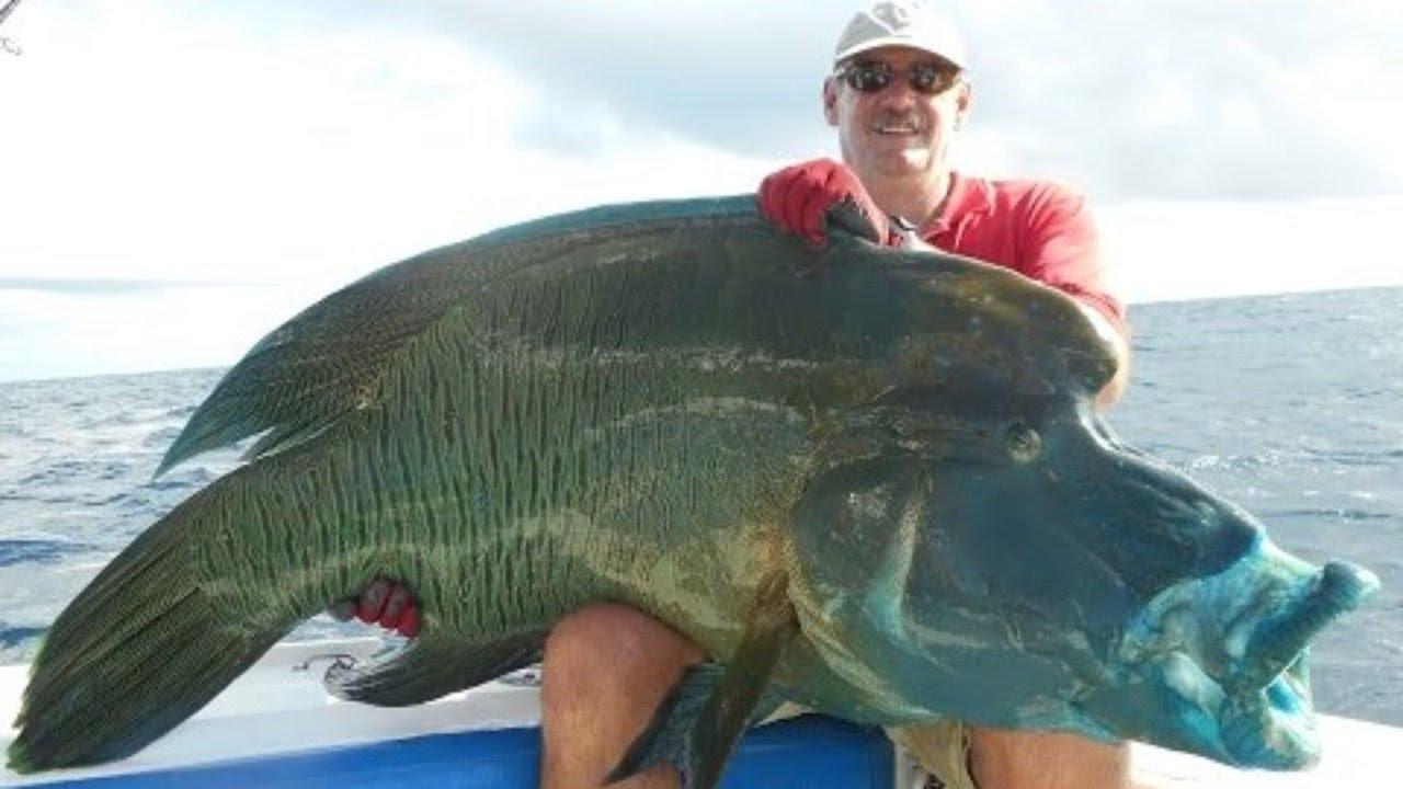 7 peces que no creer s que existen en el fondo mar youtube - Fotos fondo del mar ...