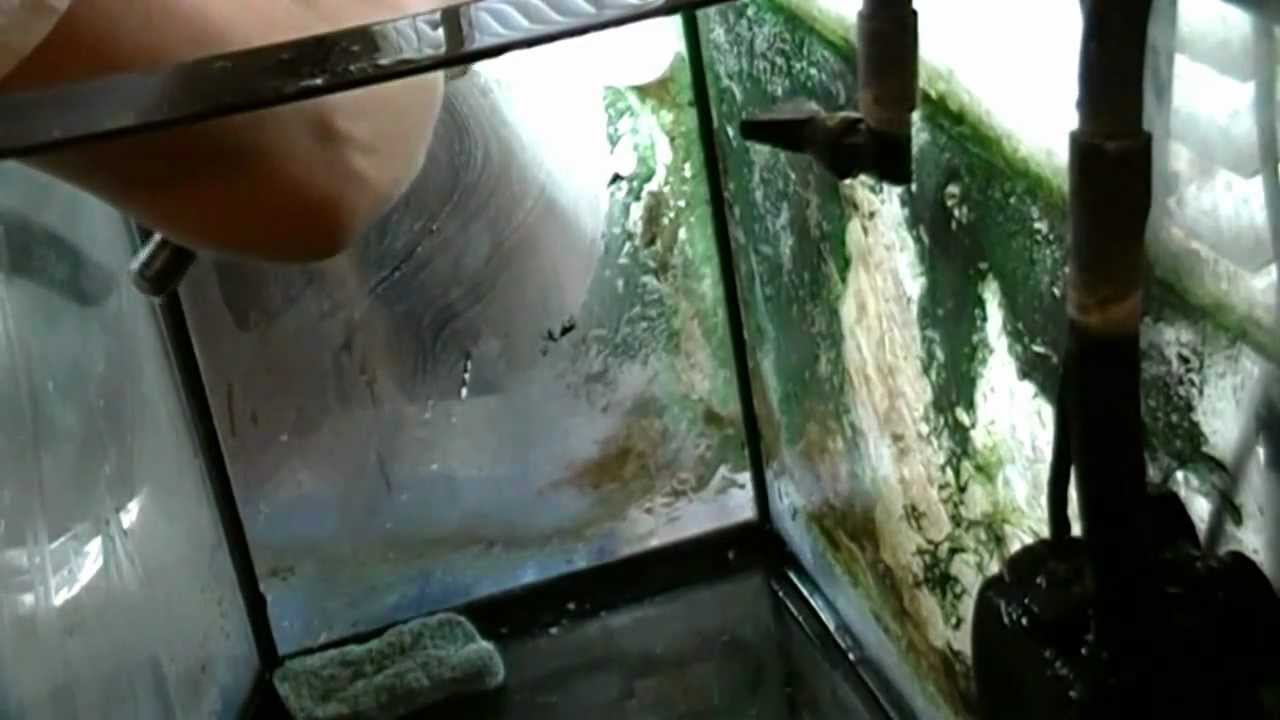 how i cleaned my very dirty fish tank youtube