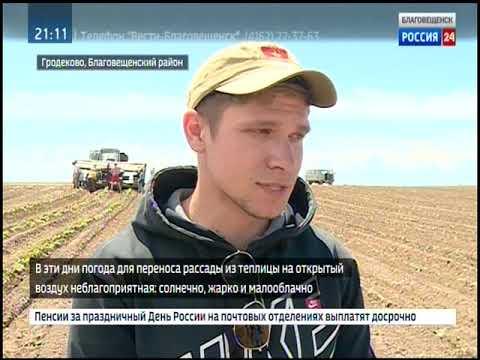 Амурские фермеры отстают от сроков посадки овощей в открытый грунт