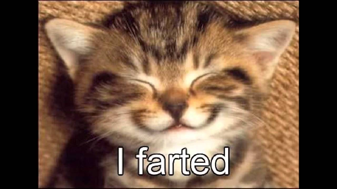 Super Cute cat kitten quotes