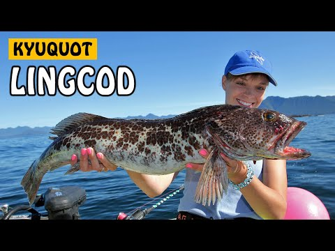 Kyuquot, The Fish Metropolis - LINGCOD | Fishing With Rod