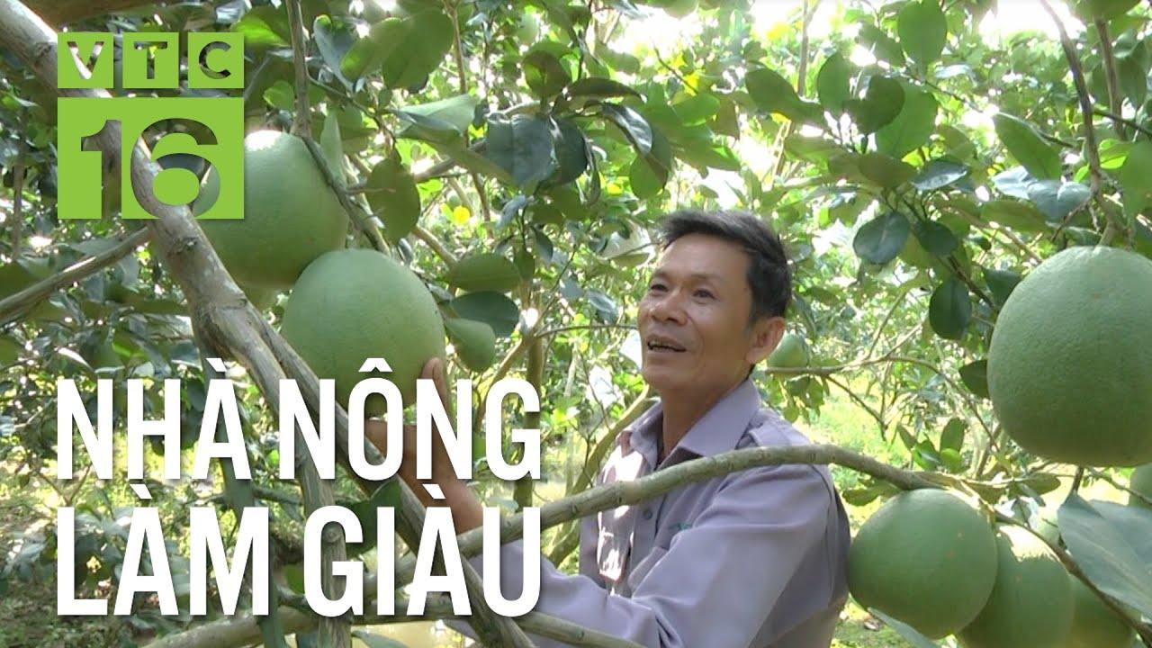 Từ 2 triệu đồng, nông dân trồng bưởi thành tỷ phú | VTC16