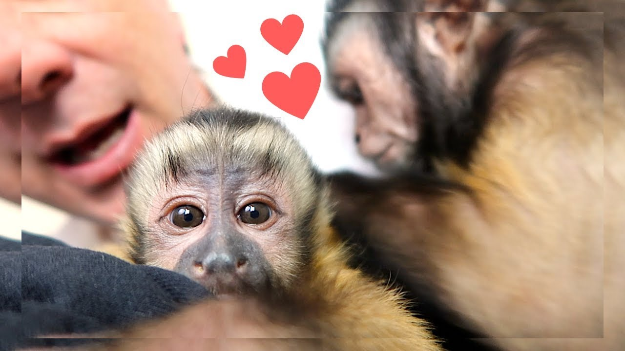 monkeys-on-the-bed-fun-time-montage