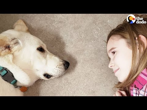 Little Girls Decide To Save A Shelter Dog's Life | The Dodo