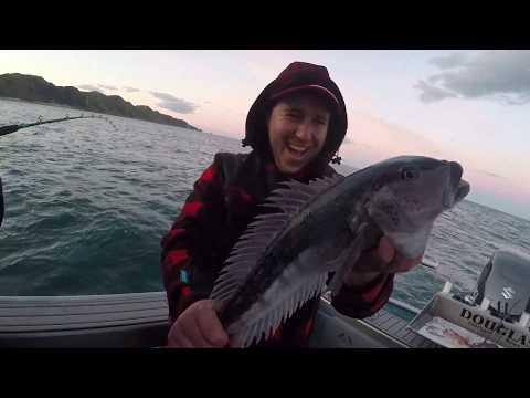 HAPUKA AND BASS FISHNG NZ