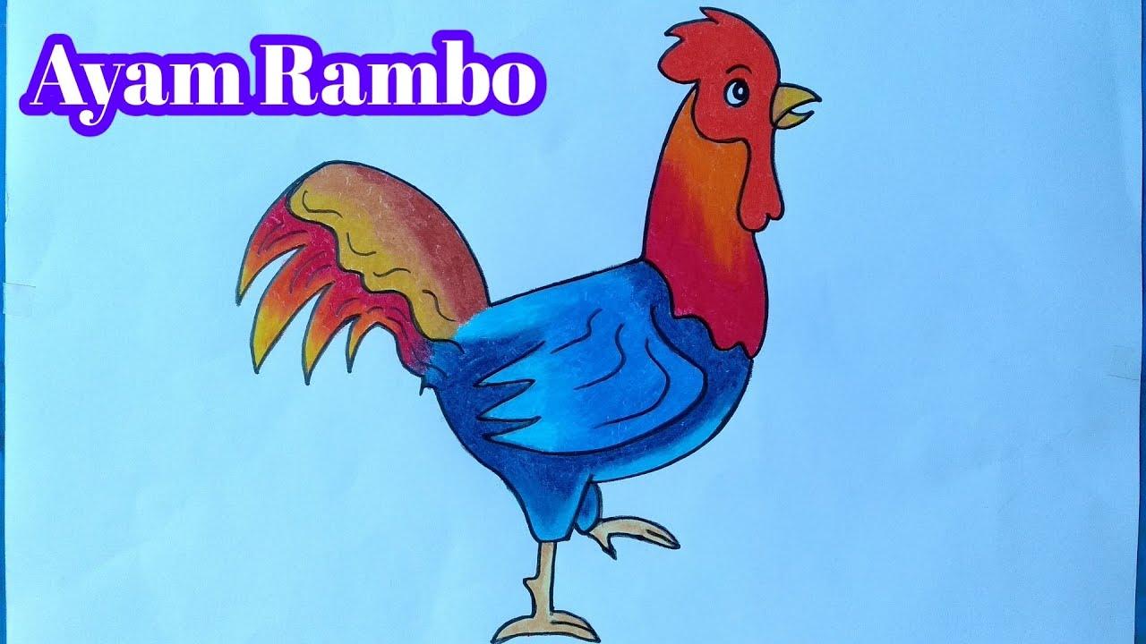 Cara Menggambar Ayam Rambo Menggambar Ayam Yang Mudah