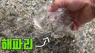 해수욕장 해파리들을 퇴치해보자! Kill Jellyfish