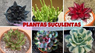 10 Espécies de Plantas Suculentas que Poucos Conhecem