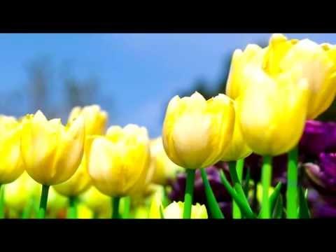 Beautiful Flowersиз YouTube · Длительность: 5 мин45 с  · Просмотров: 205 · отправлено: 07.12.2016 · кем отправлено: ЦВЕТЫ