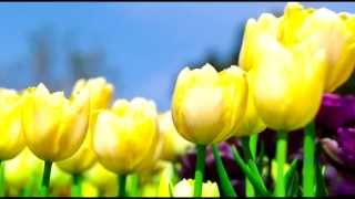 Заказать цветы с доставкой(Доставка цветов по всему миру от Music Flower Узнать подробнее: НАЖАТЬ http://tracking.actionads.ru/SH82g * Бесплатная доставка..., 2014-03-02T19:04:13.000Z)