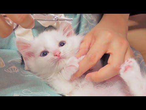 심장 폭행 아기 고양이 젤리 케어! [크림에스테틱]