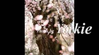 Yellow Cherry - 音楽と笑顔