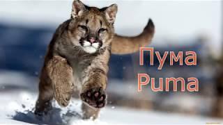 Учим диких животных 2-я часть.  Познавательное  видео для малышей на русском и английском.