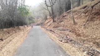 Anaimalai Tiger Reserve Video - Tiger Crossing