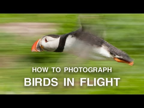 How to Photograph Birds in Flight | Wildlife Photography Tips
