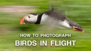 How to Photograph Birds in Flight | Wildlife Photography Tips thumbnail