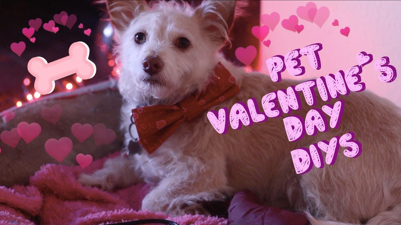 Pet Valentines Day DIYs