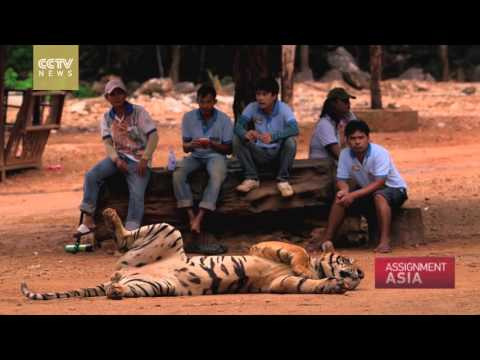 Assignment Asia Episode 10 - Conservation & Preservation