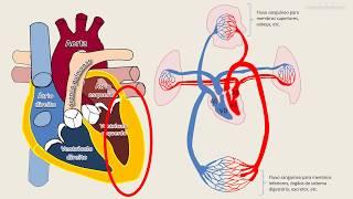 Sistema circulatório chave da do planilha