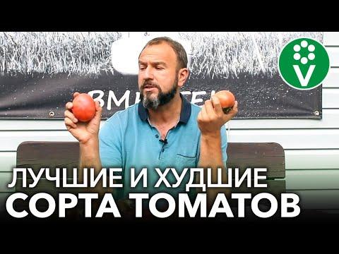 Вопрос: Какие сорта томатов продаются в торговых сетях?