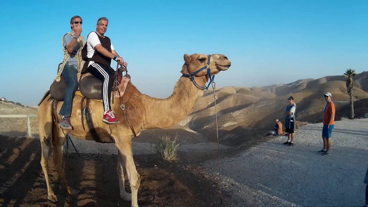 Camel Riding In Israel At Genesis Land In The West Bank