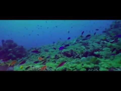 Tropical Coastal Ecosystems