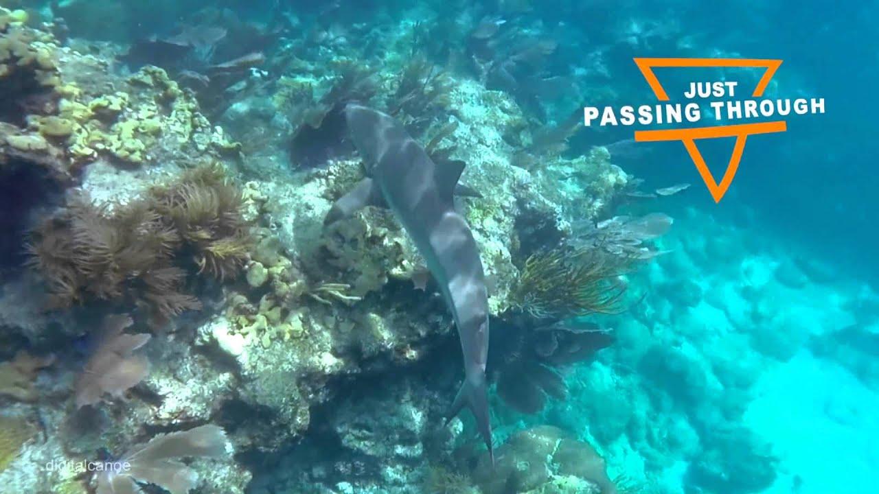 Snorkeling At Looe Key Reef In The Florida Keys