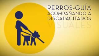 Perros-guía, en Guaguas Municipales