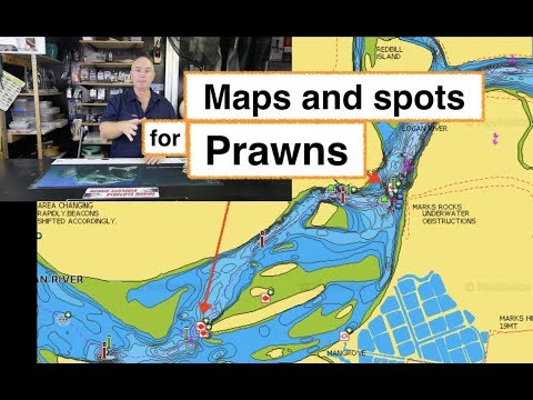PRAWN FISHING, Logan River To Caboolture River, Napa And Spots