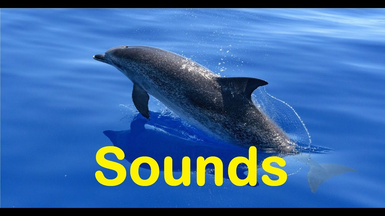 Dolphin Sound Effects All Sounds - YouTube