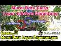 Murai Batu Jawara Lepas Sebelum Digantang Buat Heboh Satu Lapangan  Mp3 - Mp4 Download
