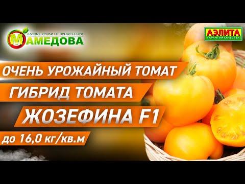 ОЧЕНЬ УРОЖАЙНЫЙ ТОМАТ до 16,0 кг кв.м. Гибрид томата Жозефина.