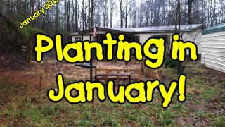 Planting in January