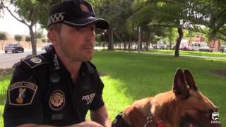 Urko, Unidad Canina de la Policía Local de Paterna
