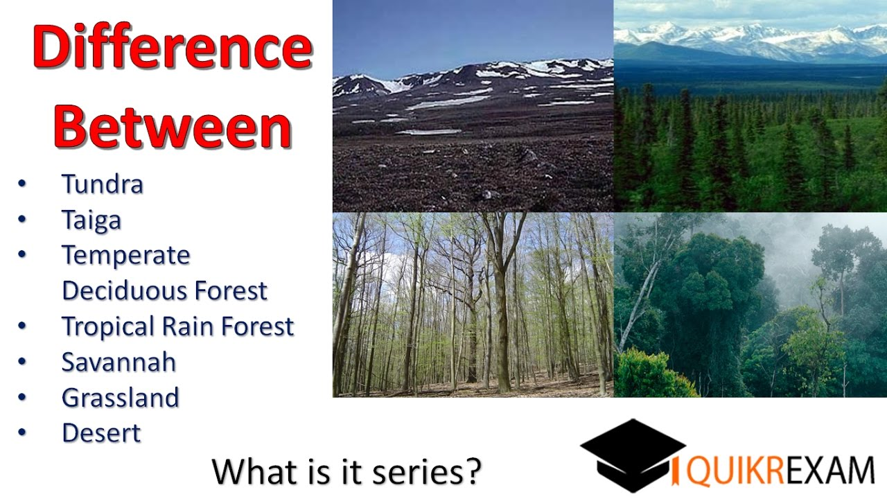 Difference Between Tundra Taiga Temperate Tropical Rain