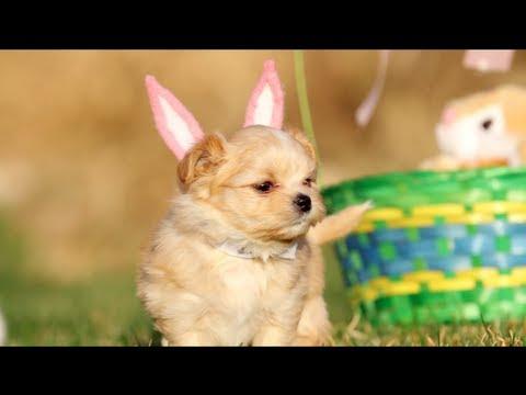Puppy Easter | DEVINSUPERTRAMP